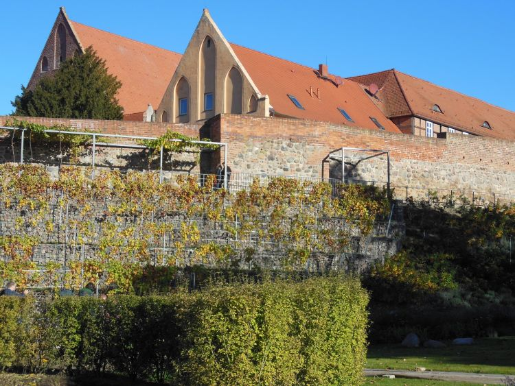 Die LaGa 2013 nutzte die Stadt Prenzlau zur Verbesserung des Stadtumfeldes. Hier der neu gestaltete Weinberg an der Stadtmauer, im Hintergrund das Dominikanerkloster. Im 18. Jh. bestand hier schon einmal ein Weinberg. (Foto: Jürgen Theil).